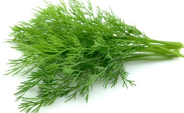 The importance of dill in to