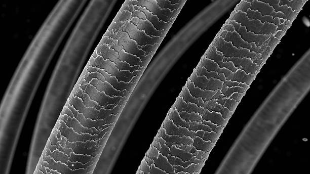 hair_structure_microscope